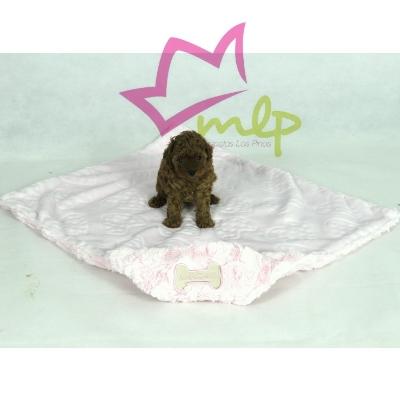 manta suave y caliente para perros y gatos pequeños.