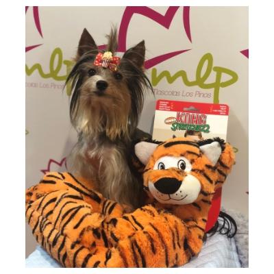 Divertido juguete Kong tigre para perros. Peluche gigante alargado en forma de simpático tigre. Kong Stretchezz Jumbo es un juguete para perros perfecto para jugar y estirar.