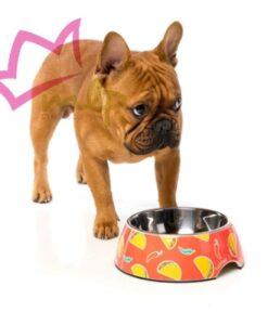 Comedero Summer Punch. Comedero para perros de acero inoxidable que se puede lavar en el lavavajillas. Están hechos de melamina resistente con certificado de garantía 100% BPA Free para cuidar de la salud del perro. Desmontable para que se pueda usar de comedero y bebedero y con una goma antideslizante en la base. Su diseño está grabado en máxima definición. MATERIAL: Interior de acero inoxidable, base de melamina con certificado de garantía 100% BPA Free, base de goma antideslizante. MEDIDAS: S: 190ml de capacidad. M: 400ml de capacidad.